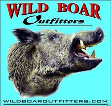 Hog Hunt, Wild Boar Hog / Pig in North East TX, Lodging included