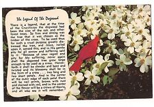 CARDINAL Red Bird LEGEND OF THE DOGWOOD Blossoms Jesus Crucifixion Postcard