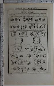 1788 ORIGINAL PRINT BOTANY LINNEAN SYSTEM FLOWERS MONOCCIA DANDELION