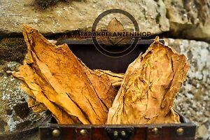 Tabakblätter ''Burley'' 1 Kg Premium Qualität (Tabak,Tabakpflanzen)