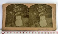 #7081 The Queen Of Flowers Antique 1892 Sepia W.Kilburn Victorian Stereoview