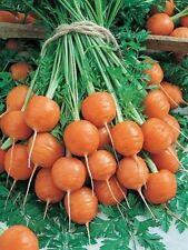 Seeds Sweet Carrot Paris Market Red Organic Heirloom Ukraine