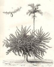 PLANTS. Exotic Plants. 1. Calabash tree; 2. Betel nut palm 1880 old print