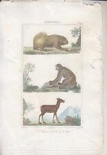 C1 BUFFON Gravure Couleurs UNAU / AI / MUSC VAUTHIER 1828