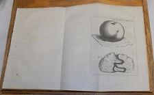 1756 Antique Print, Medical///  CANCEROUS TUMOR