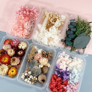 1 Box Real Dried Flowers For Art Craft Epoxy Resin Candle Wedding Gifts DIY