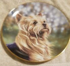 "Danbury  Yorkshire Terrier Dog Plate ""Anticipation"" By Paul Doyle A1278"