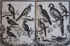 Description des quadrupèdes, oiseaux et reptiles les plus curieux..1708