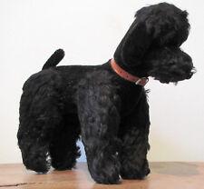peluche 136_chien caniche, Poodle dog, Poedel hond, hund