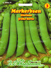 Markerbse Gloriosa Erbsen früh Gemüse Samen Saatgut Sämereien Aussaat Seeds