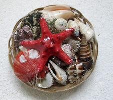 Muscheln im Korb mit  Noppen Seestern 370g zur Dekoration