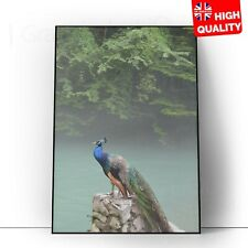 Peacock Tropical Bird Home Blue Green Feather Wall Poster Print | A5 A4 A3 A2 A1