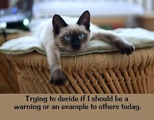 METAL REFRIGERATOR MAGNET Cat Should I Be Warning Or Example To Others Cats