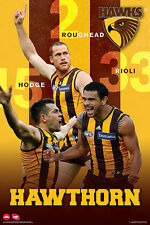 (LAMINATED) AFL HAWTHORN HAWKS POSTER (61x91cm)  PICTURE PRINT NEW ART