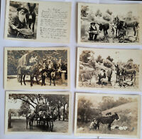 Lot of 6 Vintage Mining RPPC California Gold Miner Panning Gold Postcards