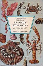 Animaux et plantes du bord de mer