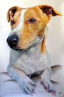 Ritratto portrait di JACK RUSSELL (dog) - Matite colorate cm. 50 x 70