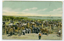 Horses On A Canadian Ranch Farming Canada 1910c postcard