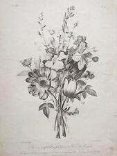 ANEMONE NARCISSE ROSE Gravure JEAN LOUIS PREVOST Dien BOTANIQUE Basset 1805