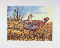 Vintage ART PRINT Pheasants W. HAROLD HANCOCK Wildlife 16x20 Bird Hunting MINT