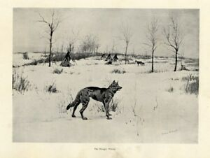 HUNGRY COYOTE LOOKING FOR FOOD AT INDIAN CAMP TEEPEE HORSES COLD WINTER COYOTE