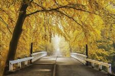 BEAUTIFUL BRIDGE POSTER fall leaves trees mist road to nowhere 36x24 art print