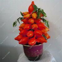 20PCS Red Lemon Bonsai Seed Tree Seeds Flower Plants Decor Home Garden Potted
