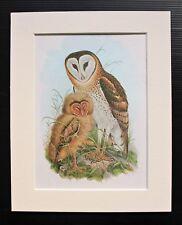 Grass Owl Bird Asia - Mounted Vintage John Gould Print 1960s Book Plate.