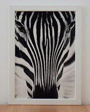 ZEBRA Druck schwarz / weiß  im weißen Holzrahmen - Bild Wohnen Dekoration
