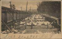 Allentown PA Duck Farm Used 1905 Postcard
