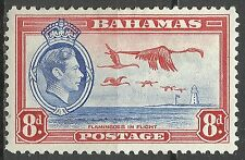 Bahamas Oiseaux Flamants Roses Greater Flamingoes Birds Rosaflamingo Vogel *1938