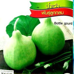 Bottle gourd  Thai Vegetable Plant Chia Tai  14 seeds x 3 Pcs.