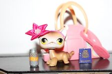 Littlest Pet Shop Shorthair Cat 19 Tan Calico Siamese Brown accessory lot bow