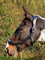 Abbie Edge soft leather headcollar with Wide poll, Anatomical shape &gem Detail
