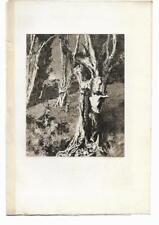 """Ary RENAN """"La Douleur d'Orphée"""" 1903 Eau-forte originale Gazette des Beaux-arts"""