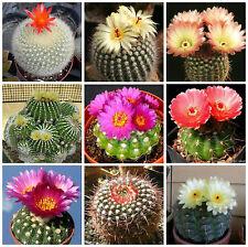 20 semi in miscuglio di Notocactus mix ,piante grasse,seed cactus mix