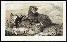 Antique Print-Gordon Setter-Hunting Dog-Grouse-Hare-Journal des Haras-1852