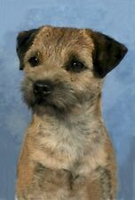 10 Border Terrier Note Cards Wow! How Cute!