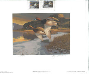 WASHINGTON #11 1996 STATE DUCK STAMP PRINT REDHEADS  by Greg Beecham 2 stamps