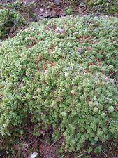 Live Moss Fresh Quality Plants Terrarium Bonsai Landscape Crafts Decoration 1gal