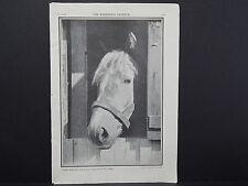 The Breeder's Gazette, Nov. 28, 1906, Photographic Print #02 Horse, Good Morning