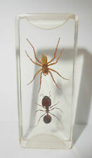 Wasp Spider & Big-Head Ant in Clear Microscope Slide Education Insect Specimen