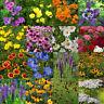 Bulk Wildflower Seed Mix - 93,750 Seeds, All Perennial, Covers 500 SQFT