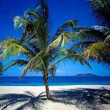 Tropical beach 10'x10' CP Backdrop Computer printed Scenic Background zjz-540