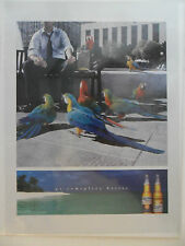 2002 Print Ad Corona Extra Light Beer ~ Go Someplace Better Feeding Parrots