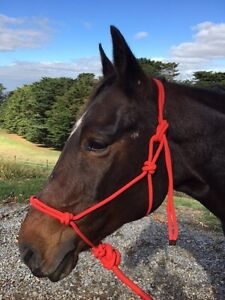 Red Rope Halter Rope Headstall 7ft lead Halter and lead set  Pony Cob Full XFull