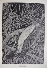 CROSSBILL : ANTIQUE Original 1948 Woodcut / Etching of Bird Birds By DAGLISH