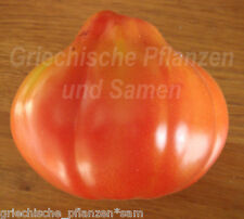 🔥 🍅 Giant Pear Tomate birnenförmige Tomaten 10 frische Samen Balkon