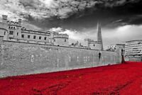 Tower of London Poppy Blood Swept Lands Seas of Red Poppies Photograph Picture