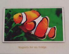 CLOWN FISH (NEMO) FRIDGE MAGNET - M337